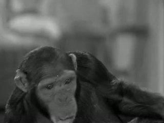Tarzans nuovo york adventure (1942)