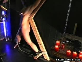 Синиця whipping