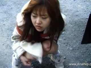 한국의 고양이 beautifully destroyed