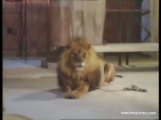Đen widow, các roman và các lion